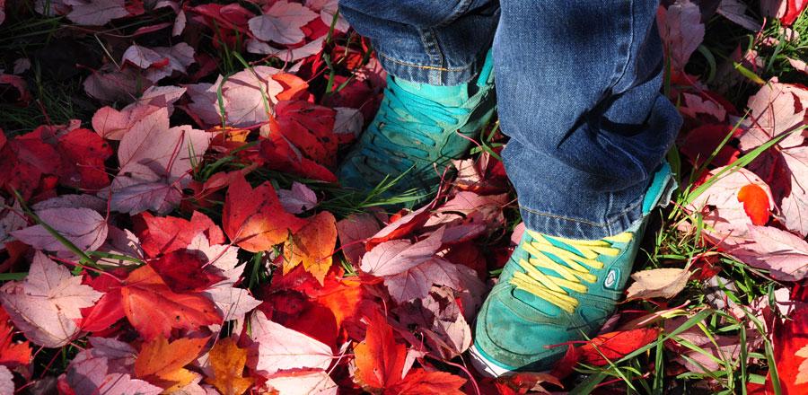 Fall at the Sunshine Coast Botanical Garden in Sechelt, BC