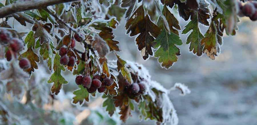 Winter at the Sunshine Coast Botanical Garden